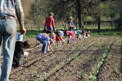 kids planting